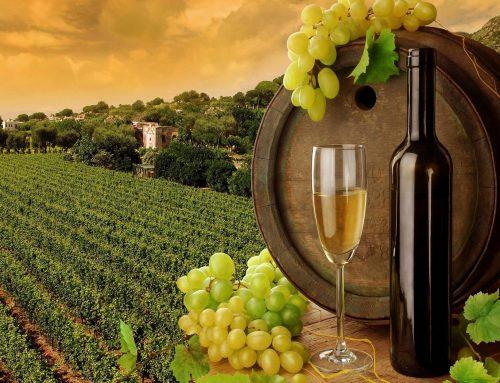 Novi natječaj iz Vinske omotnice – vinarima do 80.000 EUR potpore