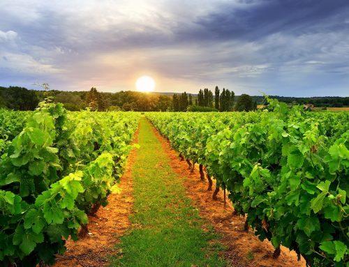 Uskoro objava natječaja za mjeru Ulaganja u vinarije i marketing vina