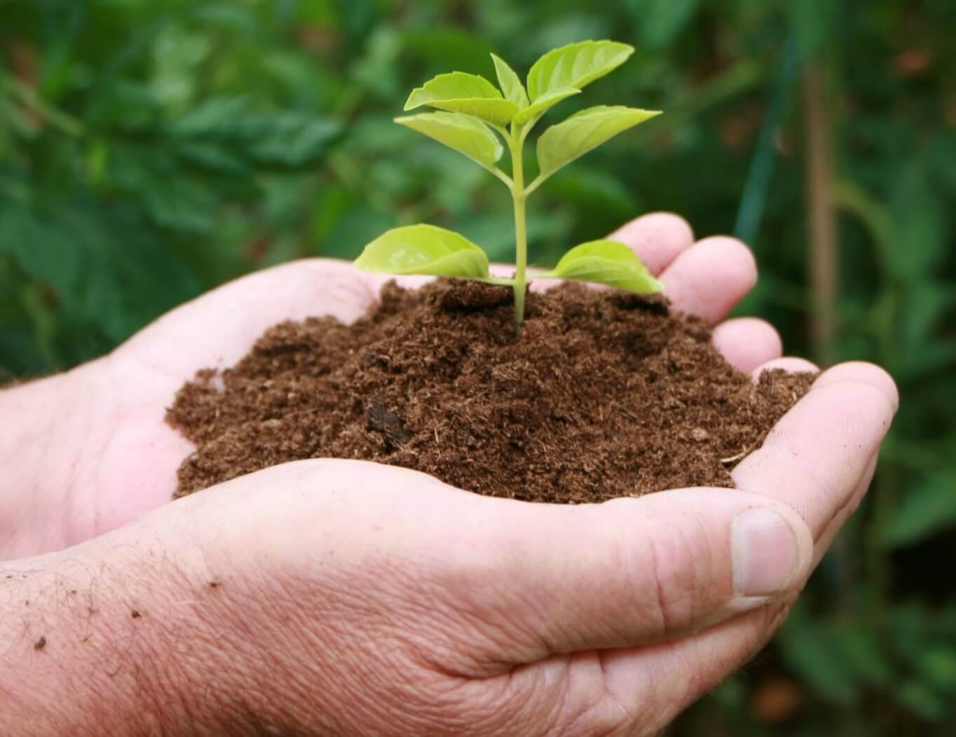 8.5.1 Konverzija degradiranih šumskih sastojina i šumskih kultura